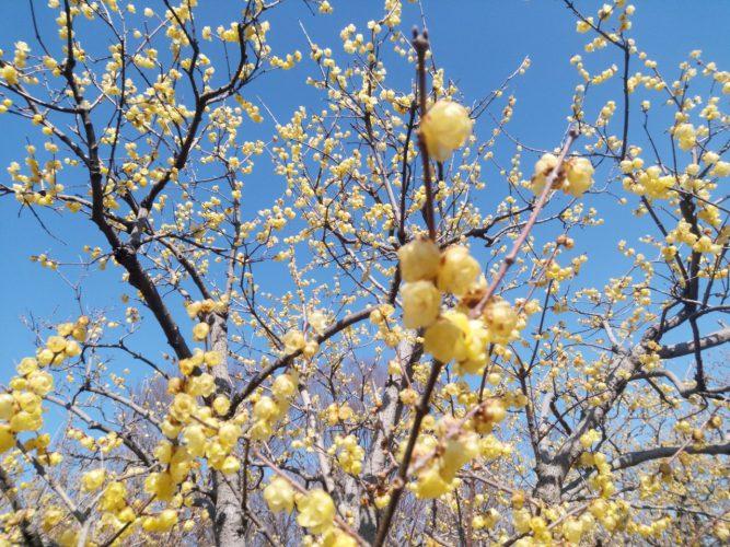 コートの中にも春が来ました!の画像